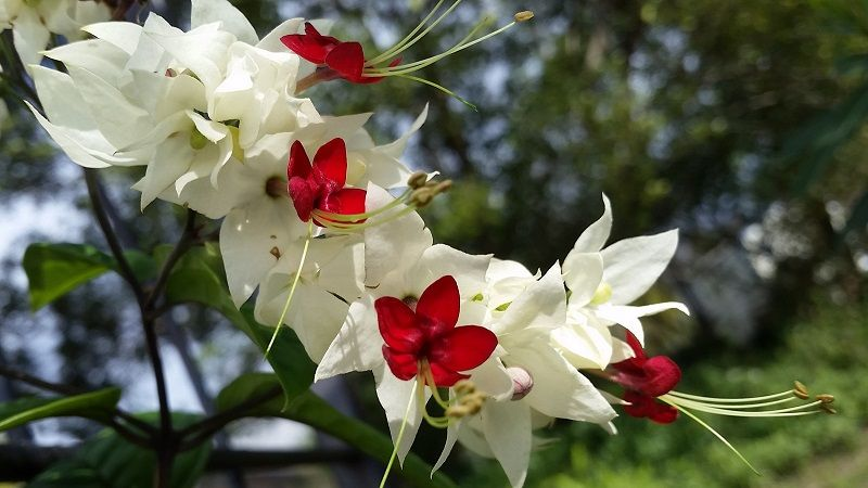 3567366767 20a3ecb45e O Jpg 3 264 2 448 Pixels Flowers Bleeding Heart Flower Wallpaper