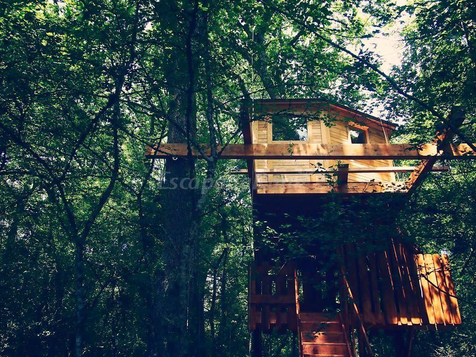 21 Ideas De Casa Del Arbol Casa Del Arbol Casas Cabañas