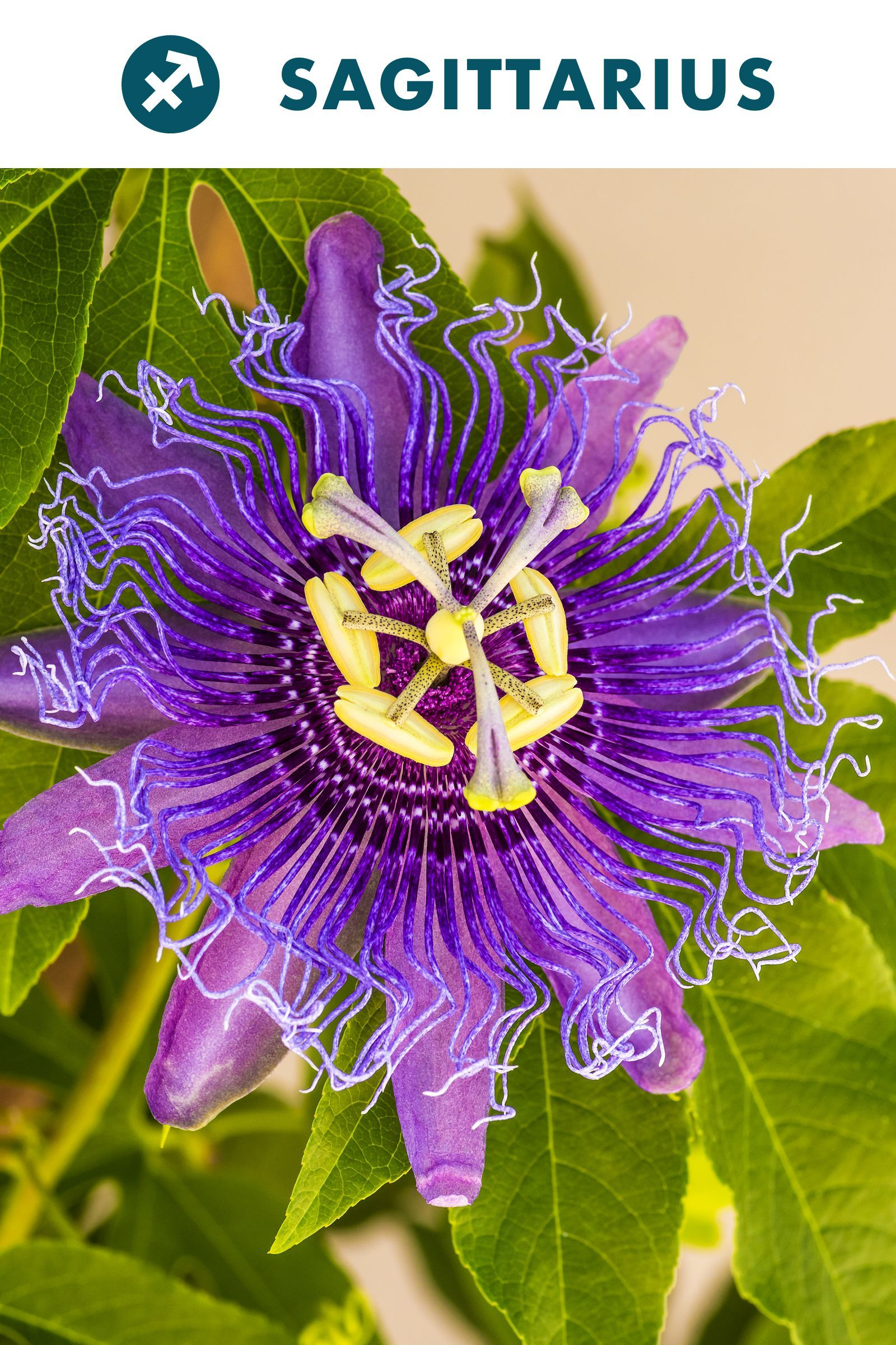 The House Plant To Buy Based On Your Zodiac Sign Passion Flower Plant Passion Flower Plants