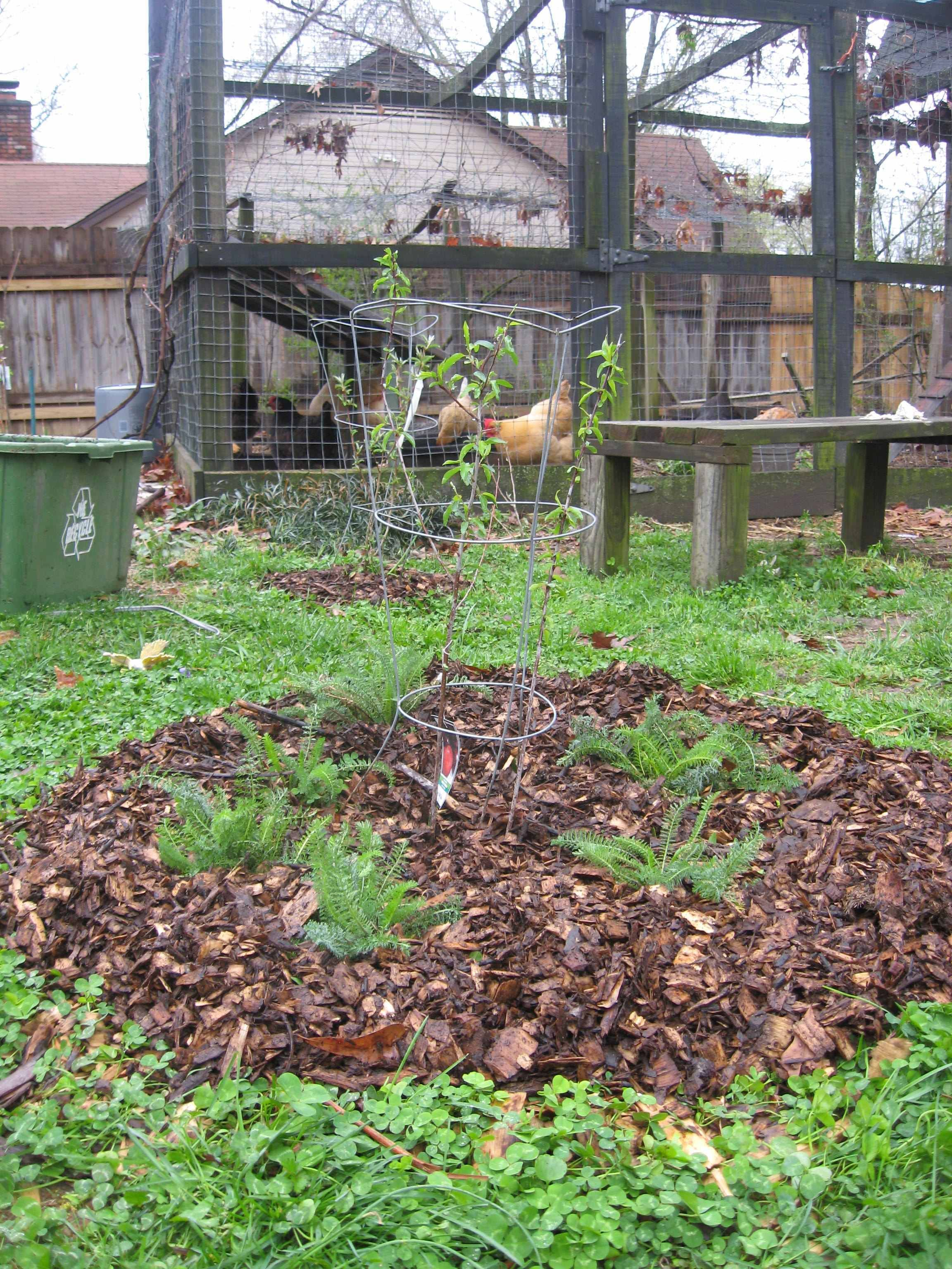 in permaculture fruit tree guilds are a way of creating a