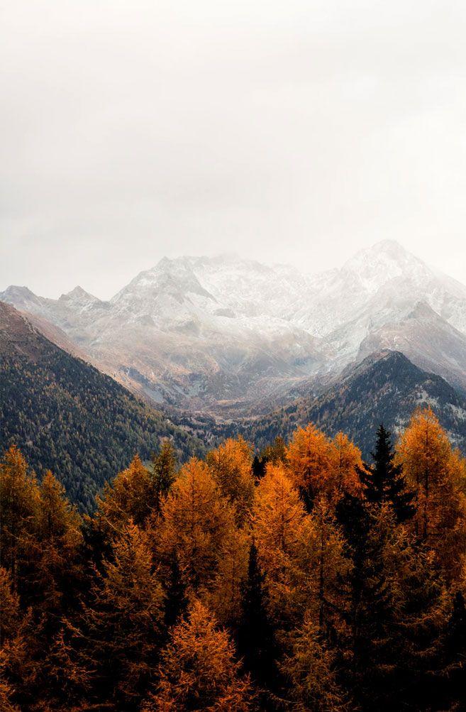Beautiful Rust Colour Autumn Tree Against Grey Mountains Fall Wallpaper Autumn Scenery Nature Wallpaper