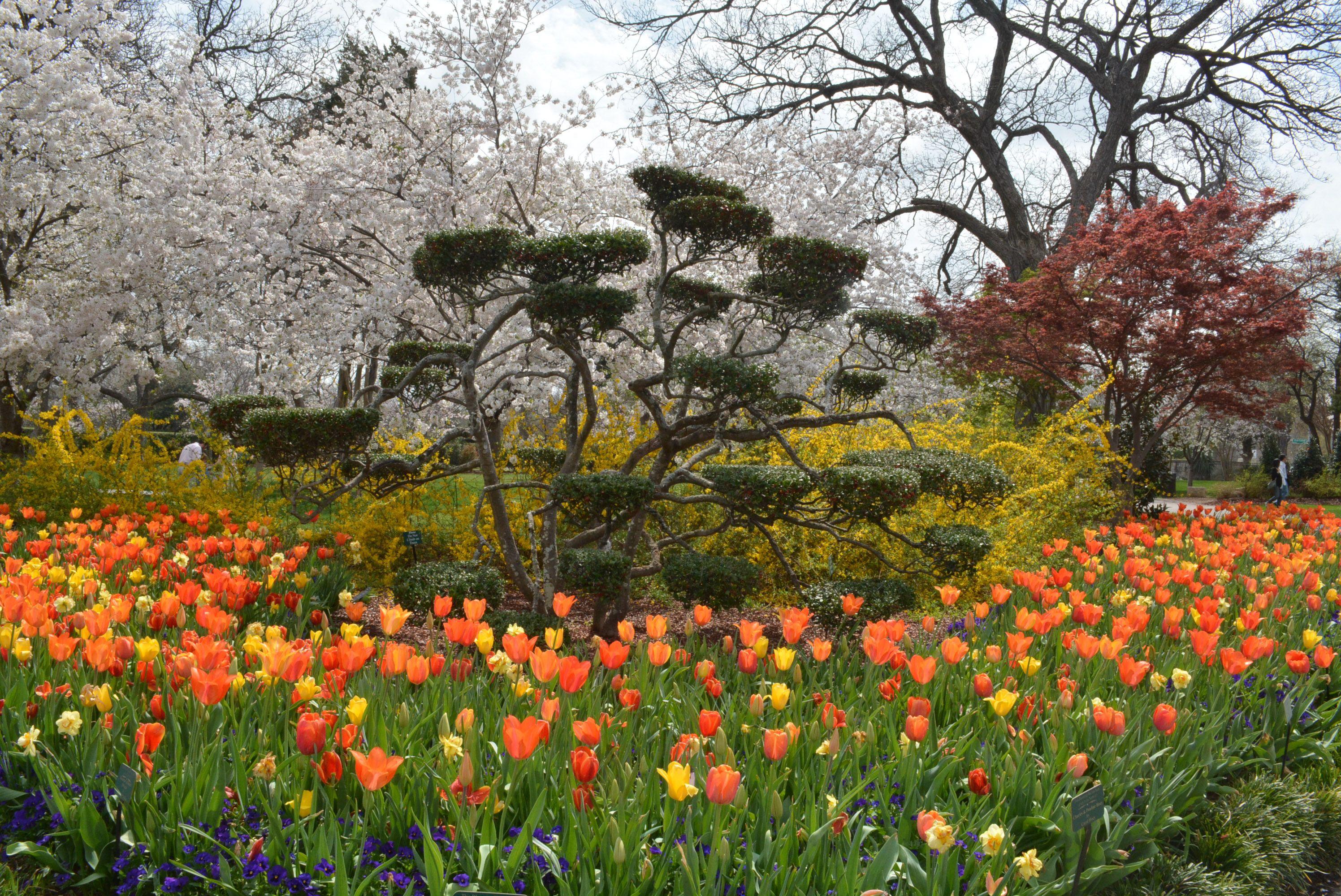 Dallas Arboretum Home Dallas Arboretum Public Garden Arboretum