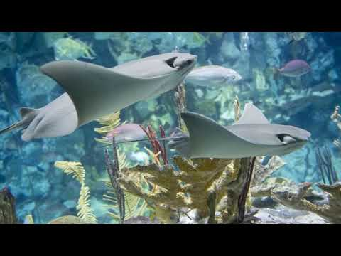 Shedd Aquarium Discount Tickets in 2020   Shedd aquarium ...