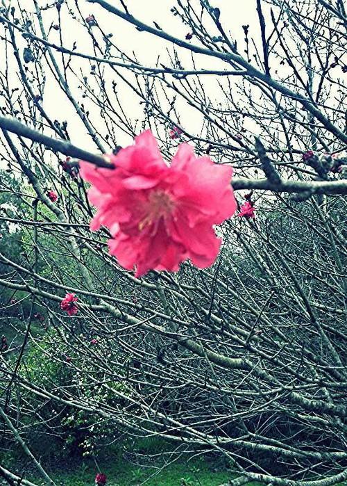 Unas flores super bonitas, estas tienen mejor calidad XD ☻  ☻  ☺