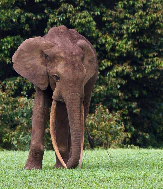 Pin By Miss Fancy Pants On Elephants
