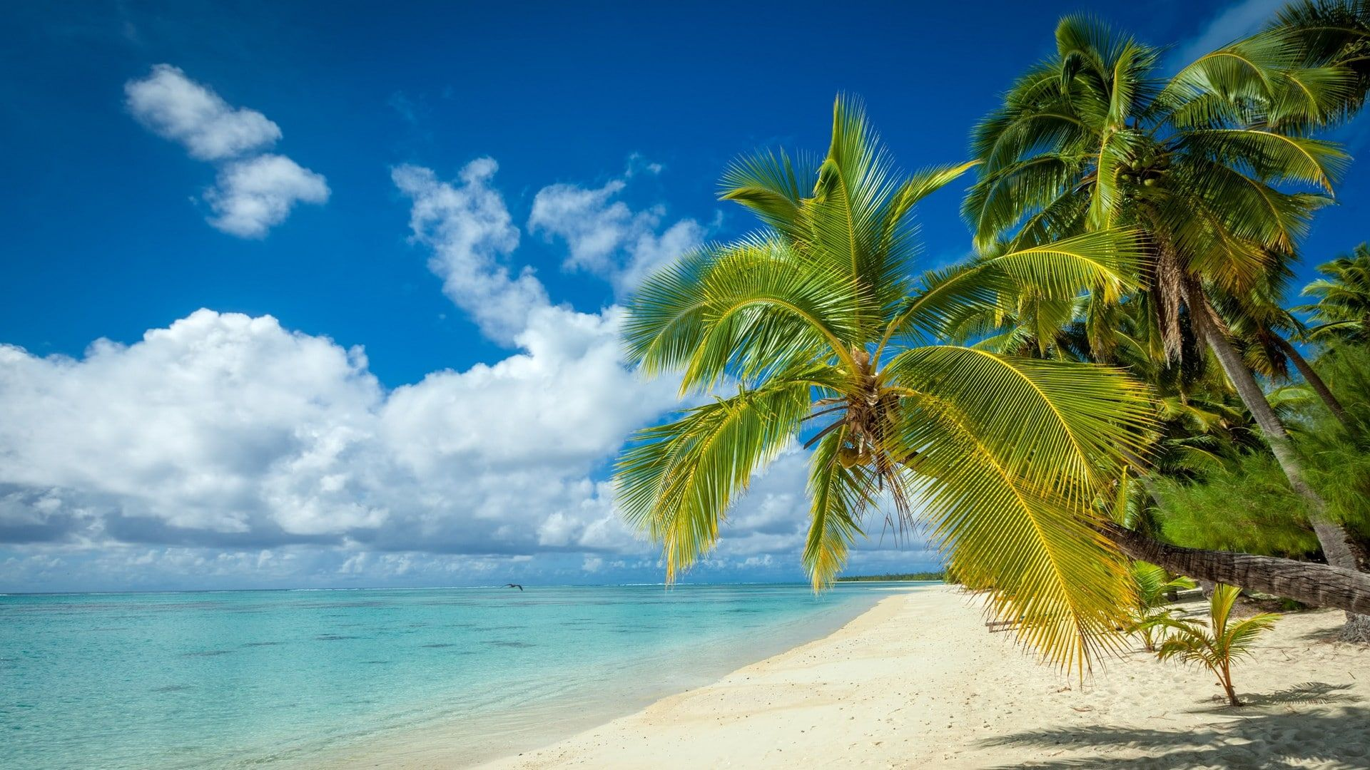 Nature Landscape Tropical Island Beach Palm Trees White Sand Sea Summer Clouds 1080p Wallpaper Hd Palm Trees Beach Wallpaper Tropical Island Beach Tropical island beach palm sea sand