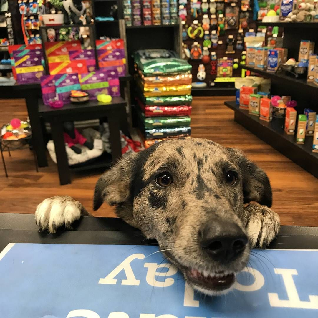 Cutecustomeralert Excuse Me Maam I Ve Been A Good Dog May I Have A Treat Pet Valu Pets Best Dogs Dogs