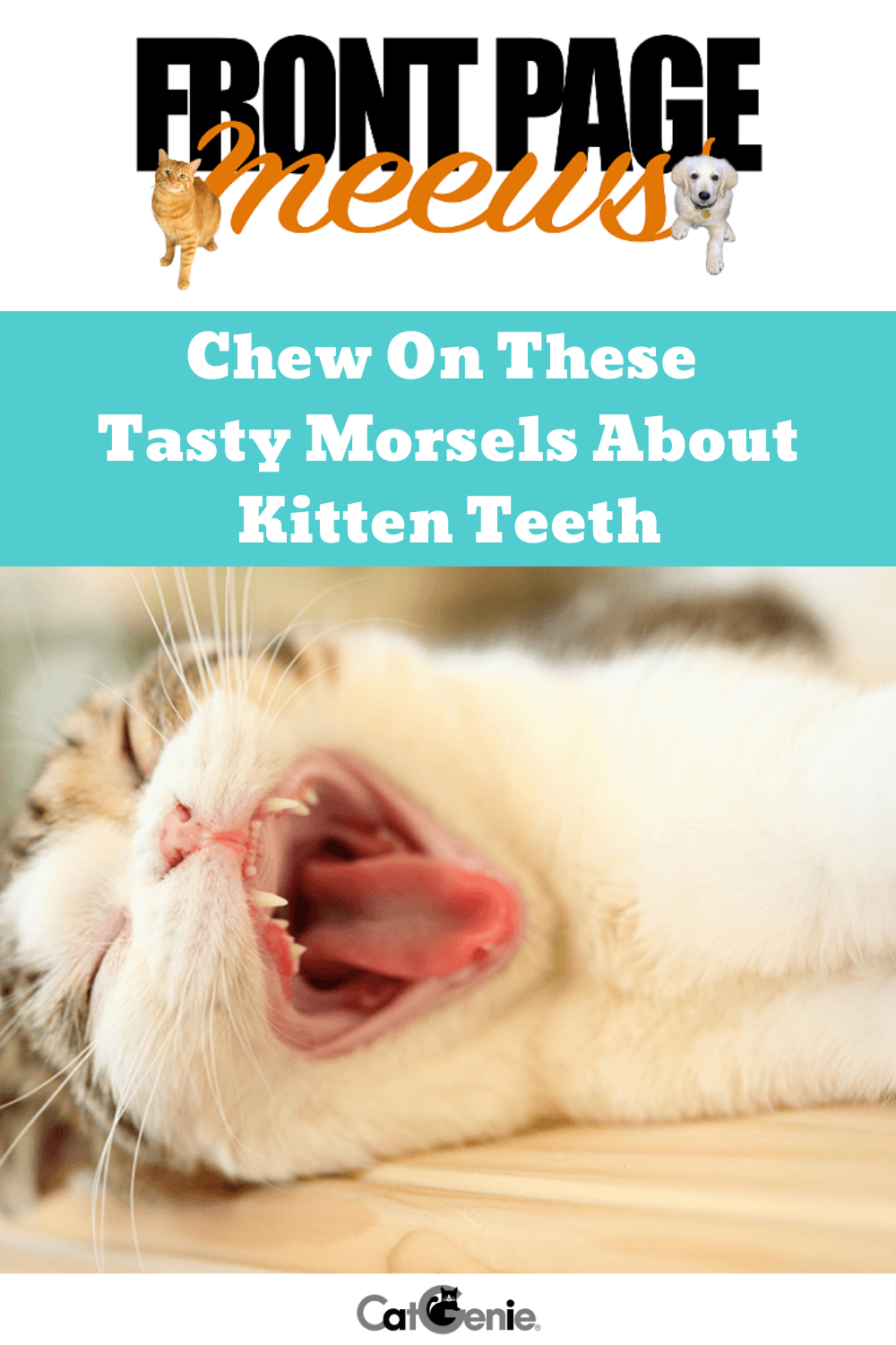A Kitten S Baby Teeth Serve An Important Function Staying In Tune With Your Kitten S Baby Teeth And Their Transiti Raising Kittens Cat Parenting Kittens
