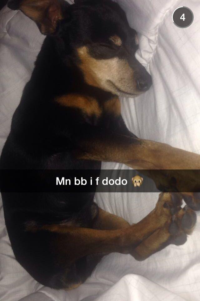 My dogggg ❤️