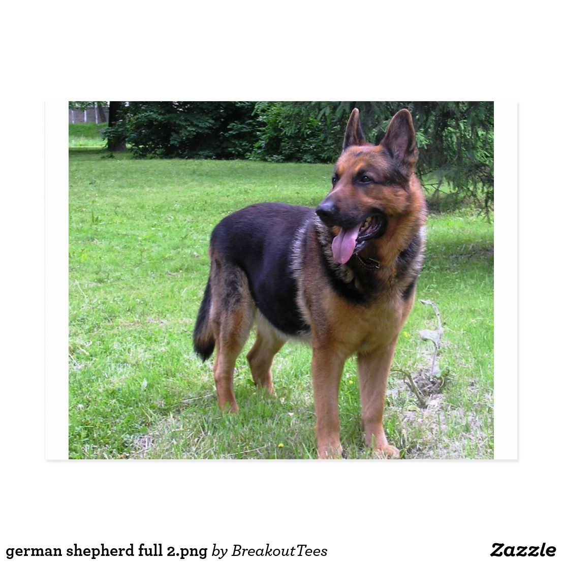 German Shepherd Full 2 Png Postcard Zazzle Com German Shepherd
