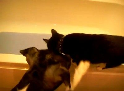Dog Pushes Cat in Tub