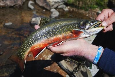 4 Wild Fishing Trout Skills   Fishing Tips and Ideas   Trout