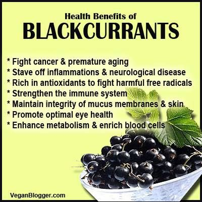 Image result for benefits of black currant