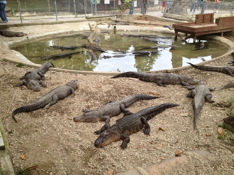 Arkansas Alligator Farm And Petting Zoo Zoo animals