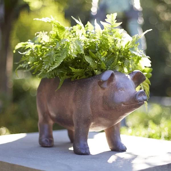 Pig Magnesia Statue Planter in 2020 Planters, Classic