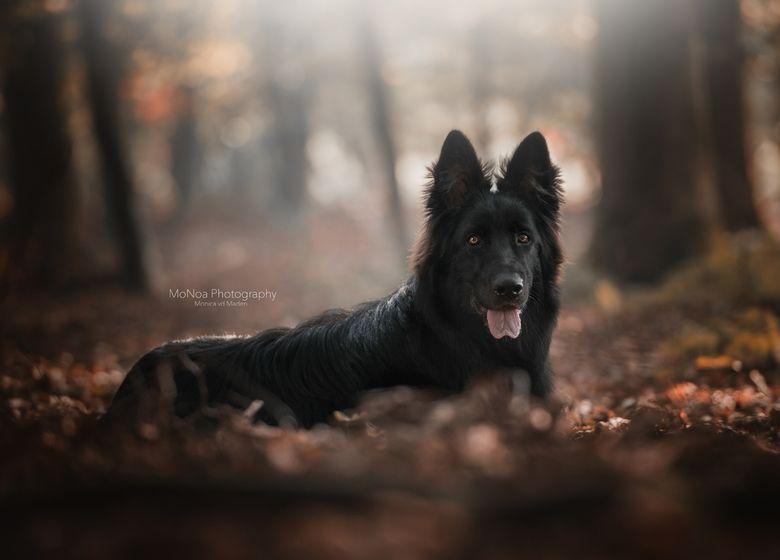 Black Beauty  70200 inspiration  Hondenfotografie