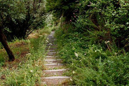 life, paths, sentieri, sentiero, sentiero della vita, senso della vita, boschi, hood, via, riflessione, paths of life