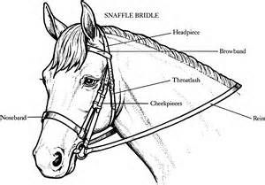 Horses Coloring Page Yahoo Image Search Results Pony Club
