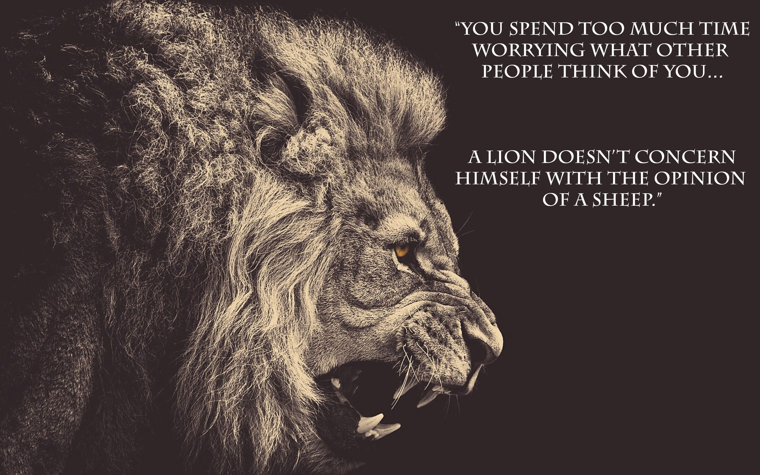 Some Motivational Wallpapers Lion Quotes Inspirational Quotes Motivation Lion