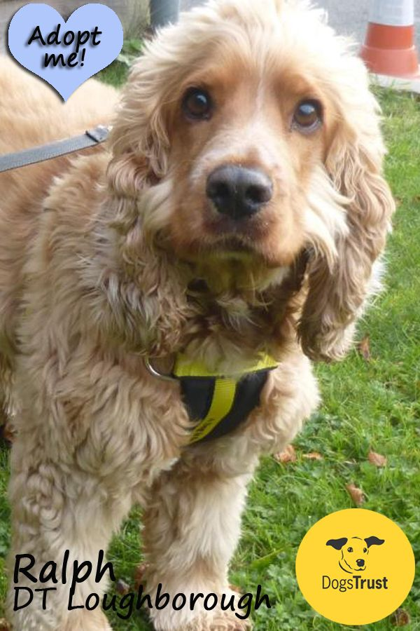 Ralph At Dogs Trust Loughborough Has Recently Arrived At The Centre And The Team Are Currently Getting To Know Him And Wh Dogs Trust Dog Friendly Holidays Dogs