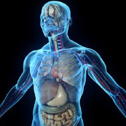 Online Anatomy Course - Online Anatomy Classes | ALISON | Anatomy ...