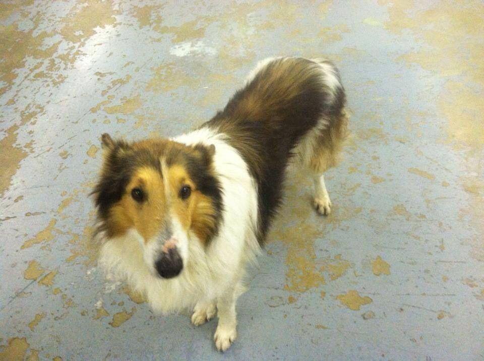 Founddog 12 26 13 Trenton Mo Green Hills Animal Shelter 660 359 2700 Https Www Facebook Com Permalink Php Story Fbid Losing A Dog Animal Shelter Find Pets