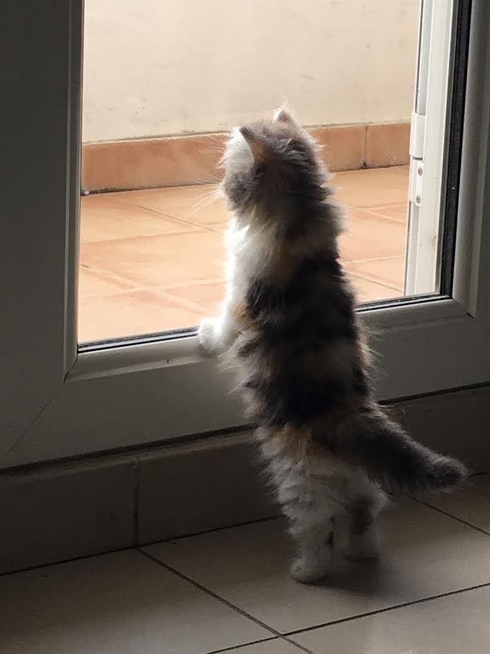 waiting for mom to come back http//ift.tt/2wTJeMf
