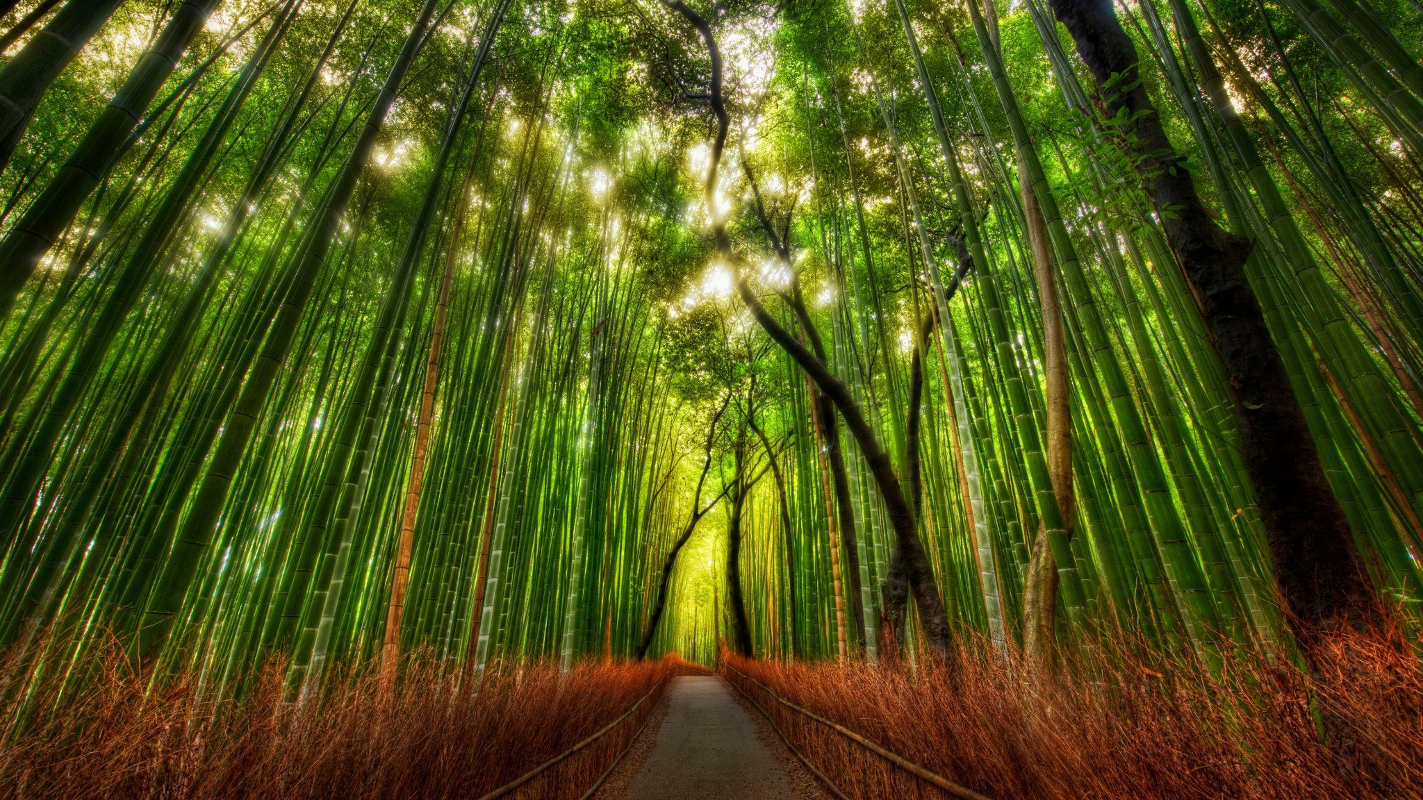 Download Free Bamboo Forest Kyoto Japan Desktop Wallpaper Hd For