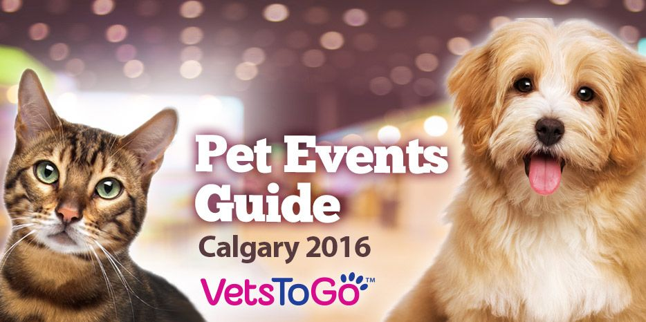 Calgary PetRelated Events 2016 Mobile vet, Vet