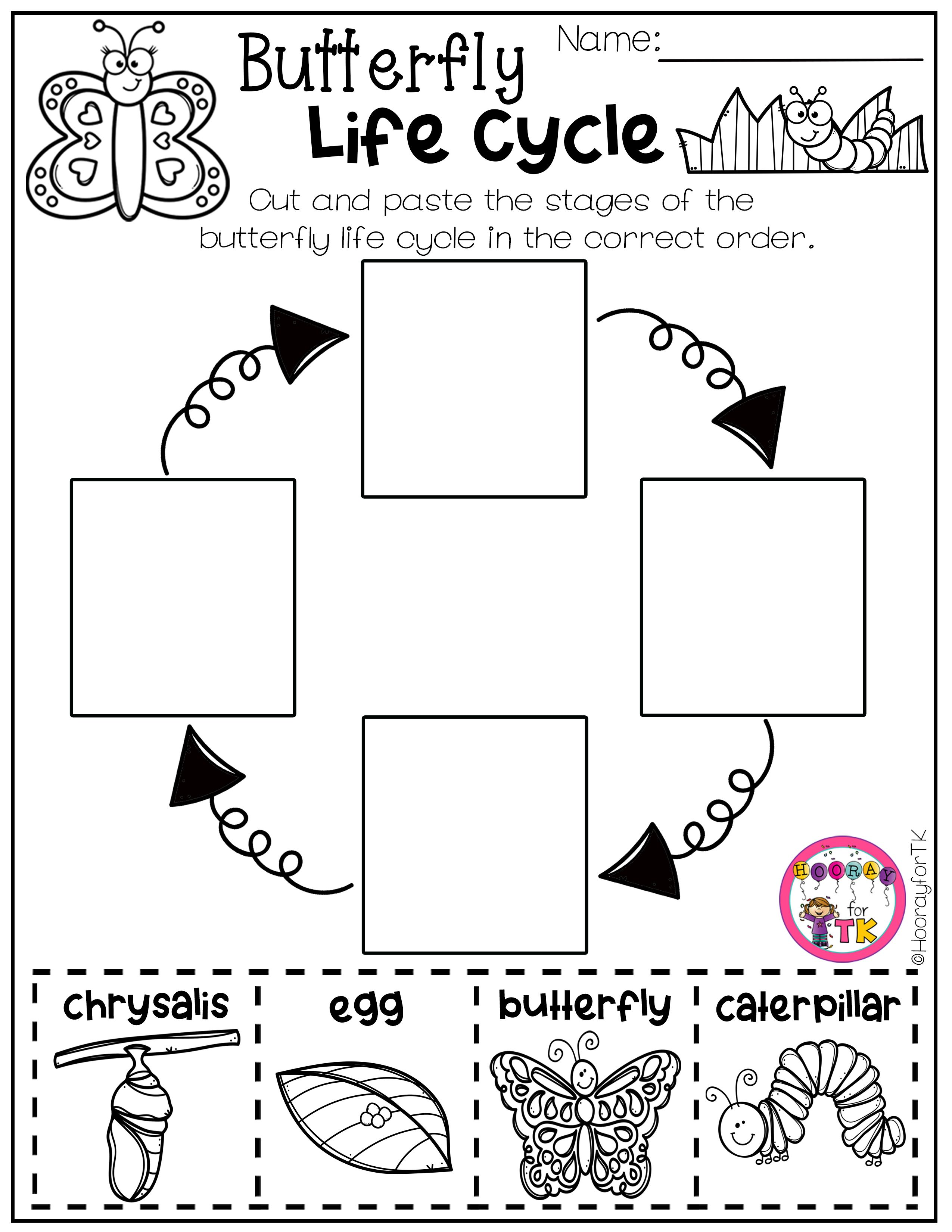 Spring Worksheets Butterfly Life Cycle Transitional