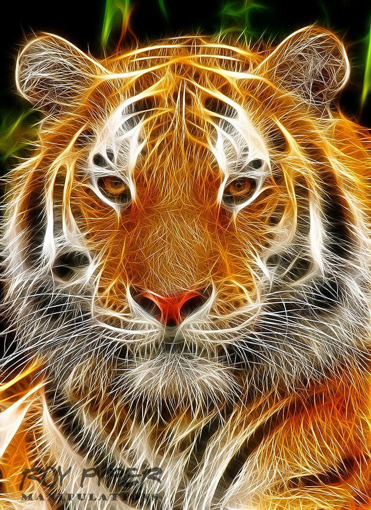 Tiger Fractalius Re Edit Tiger Pictures Big Cats Art Tiger Art