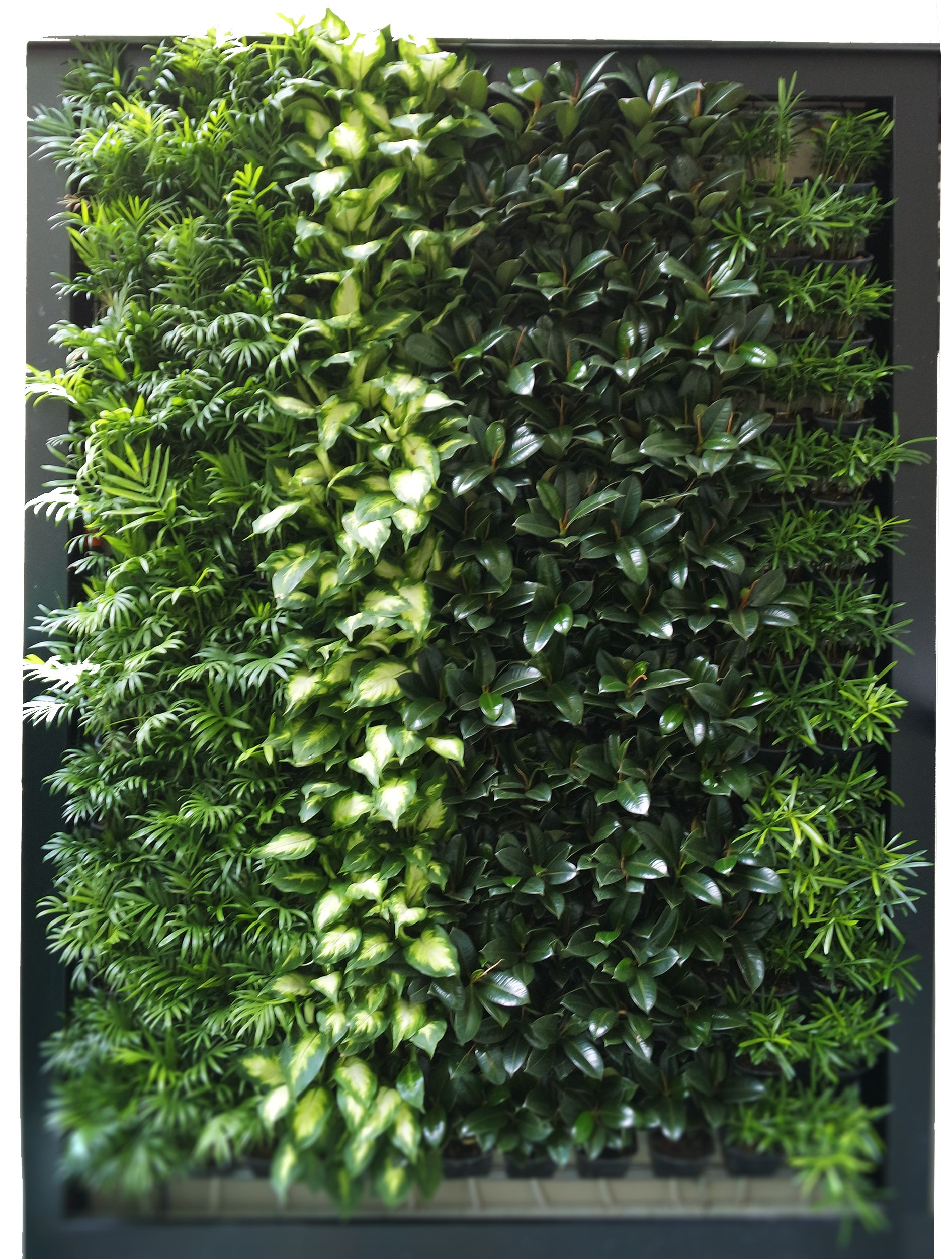 Greenamic integrated green wall and hydroponics