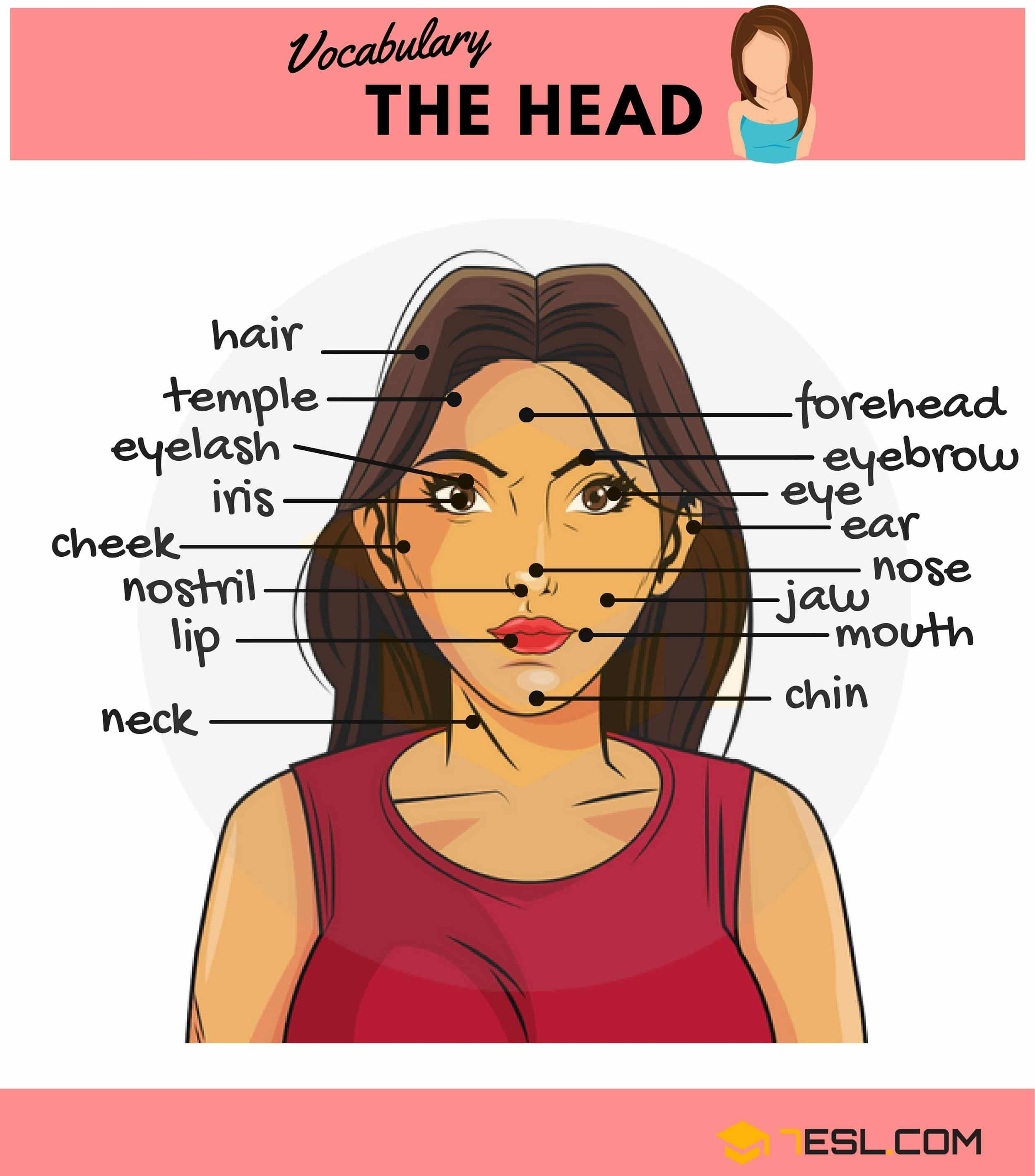 Parts Of The Body In English Ingles Pinterest Human Body