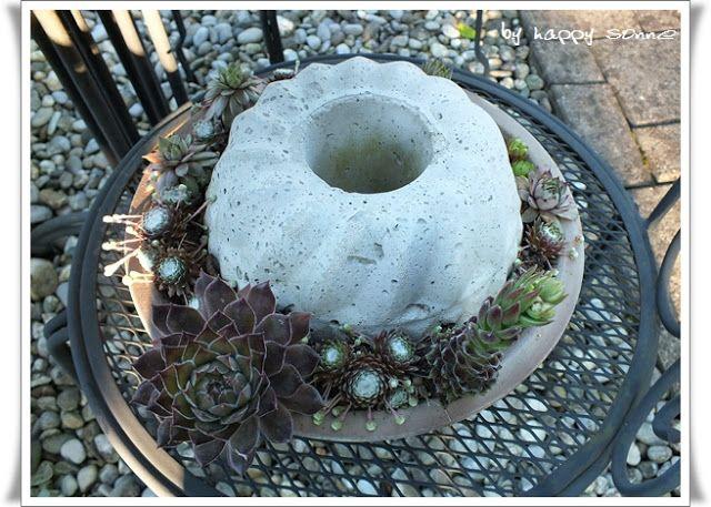 Schon Heute Möchte Ich Euch Einen Einblick In Meine Hauswurz  Und Beton Gugelhupf  Sammlungen Geben ;o) Ich Mag Diese Anspruchslose Pflanze Sehr.
