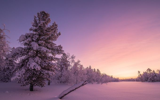 Snow On Trees Wallpaper 4k Tree Wallpaper 4k Beautiful Photos Of Nature Winter Forest