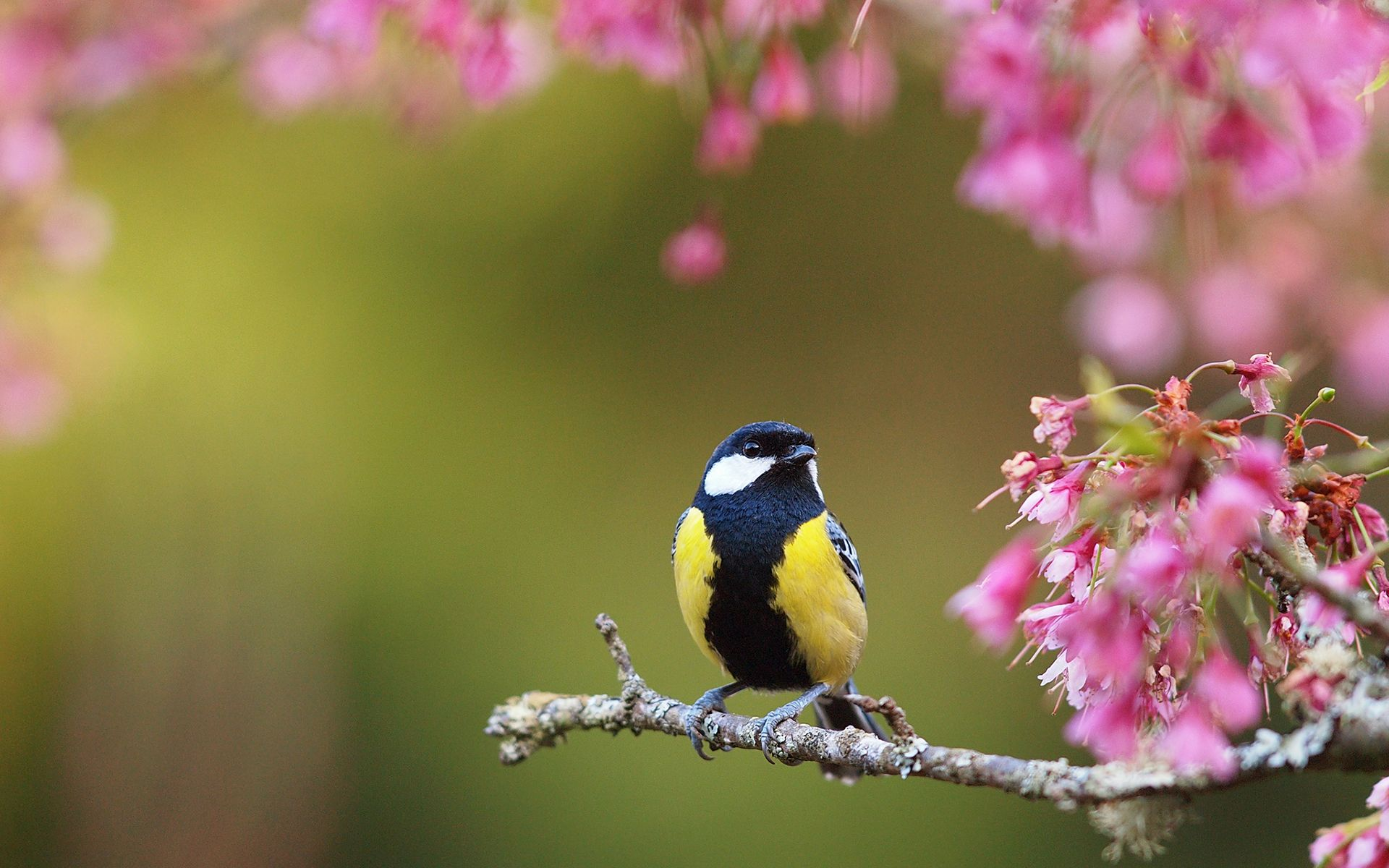 Spring Flowers And Birds Hd 1080p 12 Hd Wallpapers Aduphoto