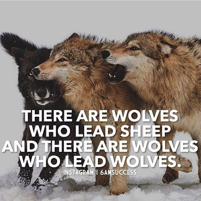 Tag A Wolf #6amsuccess