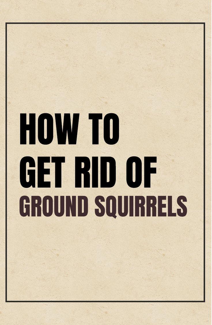 How to get rid of ground squirrels ground squirrel