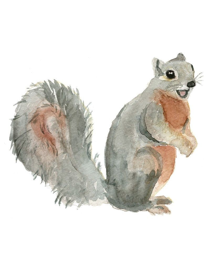 Gray Squirrel Giclee Art Print Watercolor Wall Art Print Squirrel Watercolor Art Children S Art Nursery Squirrel Art Squirrel Art Watercolor Wall Art Giclee Art