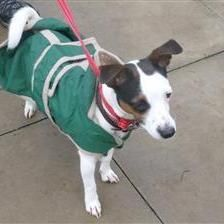 Laya - Dogs for Rehoming and Adoption - Wood Green Animals Charity
