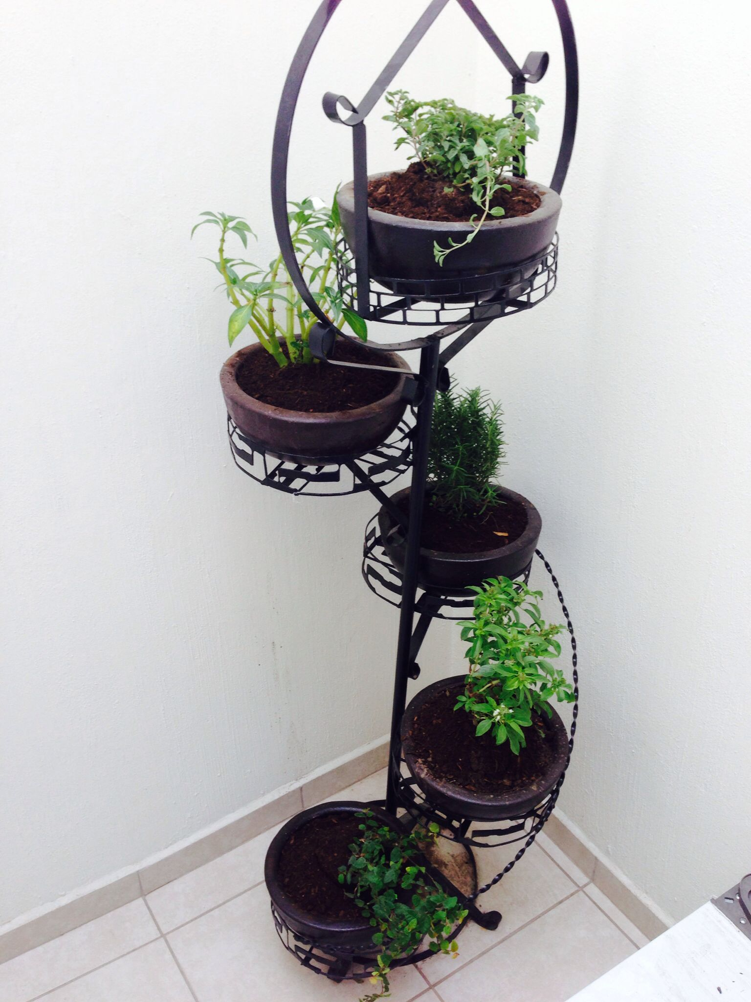 Plantas De Adorno