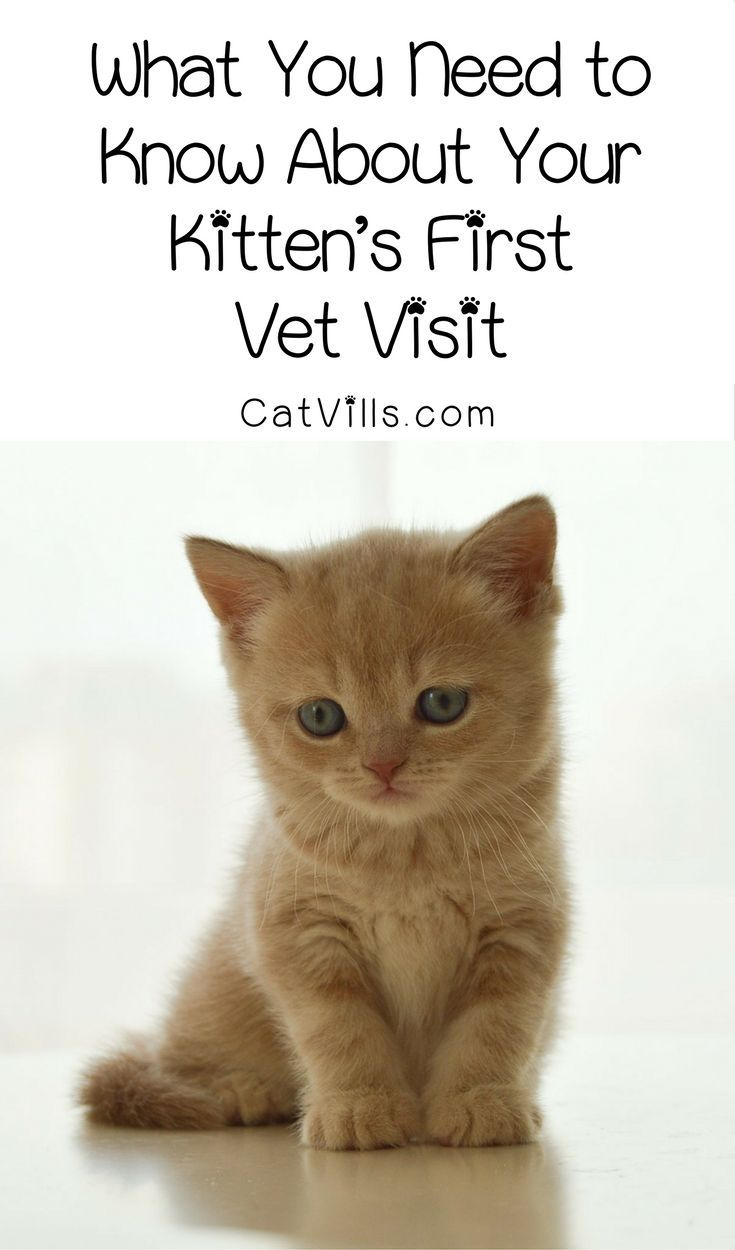 What You Need to Know About Your Kitten's First Vet Visit