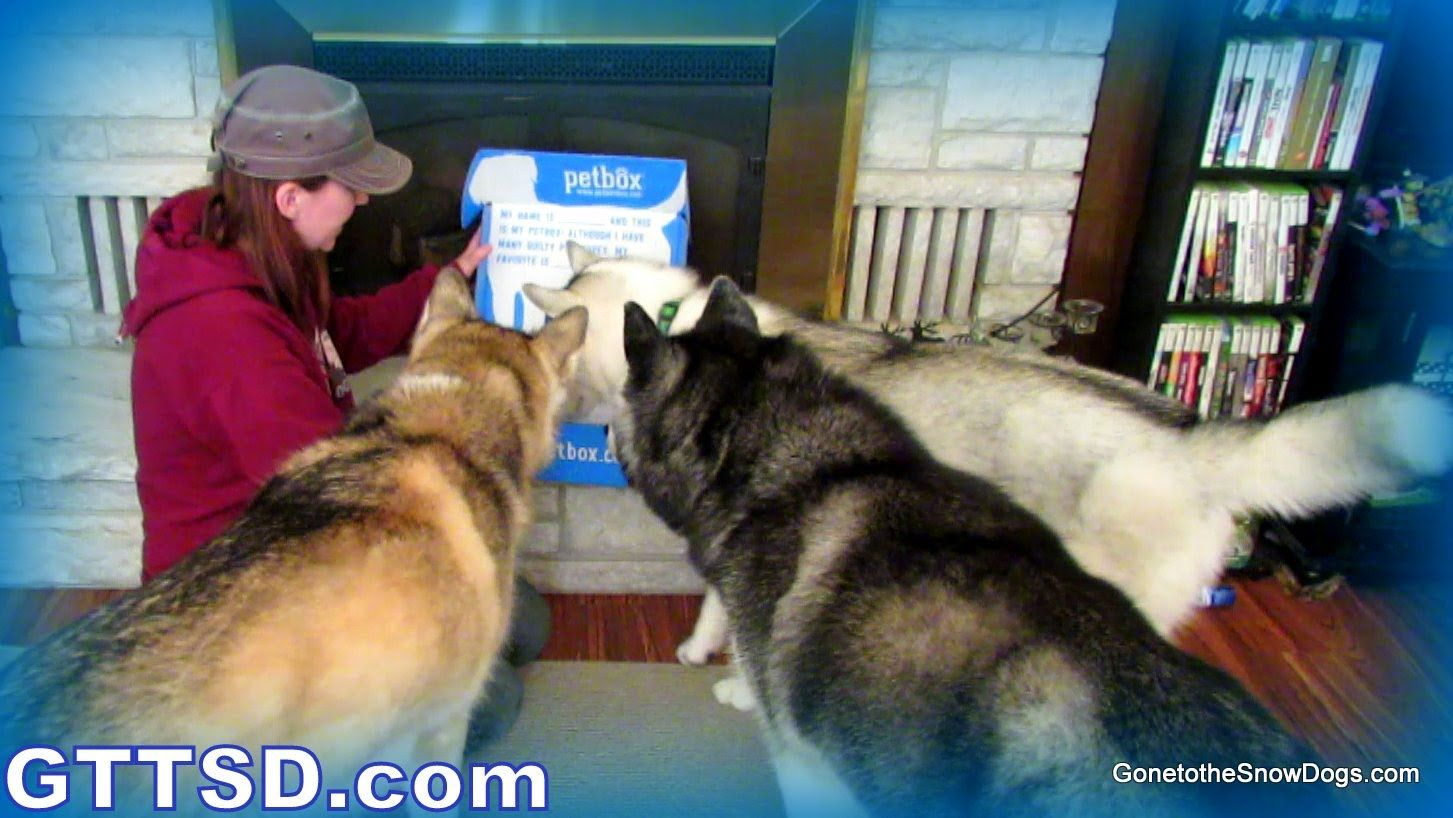 Dog tick remover petbox review dogs snow dogs dog gifs