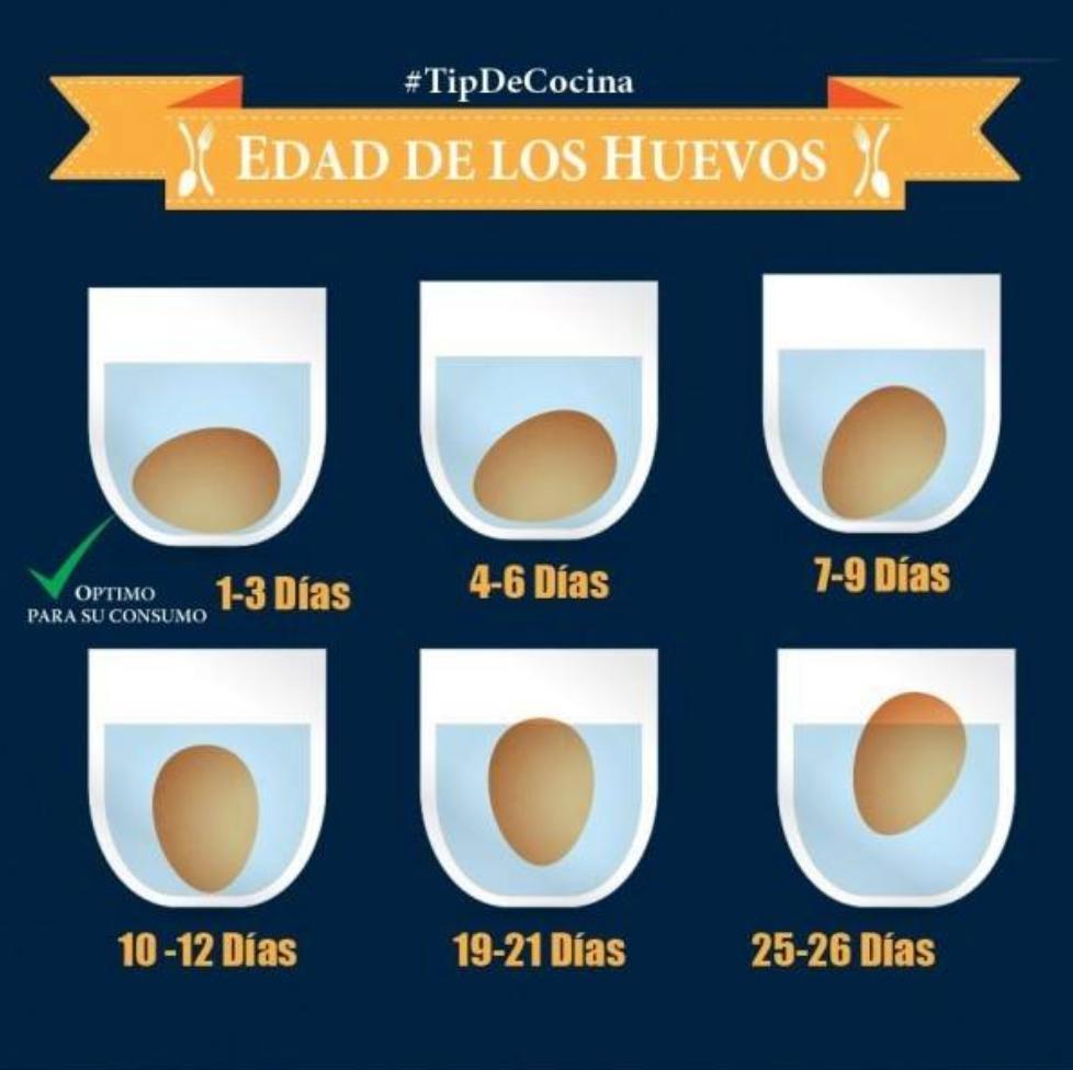 Edad De Los Huevos Cómo Saber Si Un Huevo Está Fresco Food Hacks Cooking Tips Baking Tips