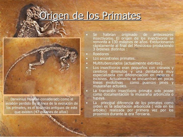 Origen de los Primates. Se habrían originado de antecesores insectívoros