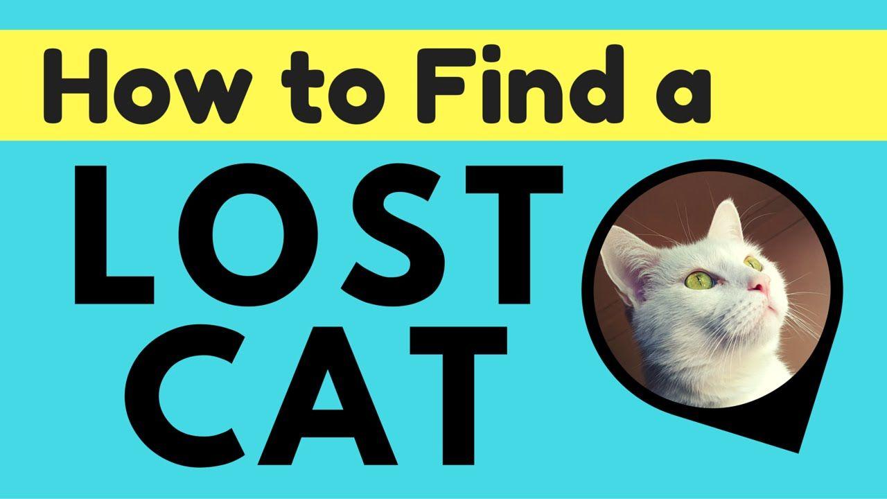 5 Tips Find Your Lost Cat Pod Gps Tracker Lost Cat Cat Pod Cats