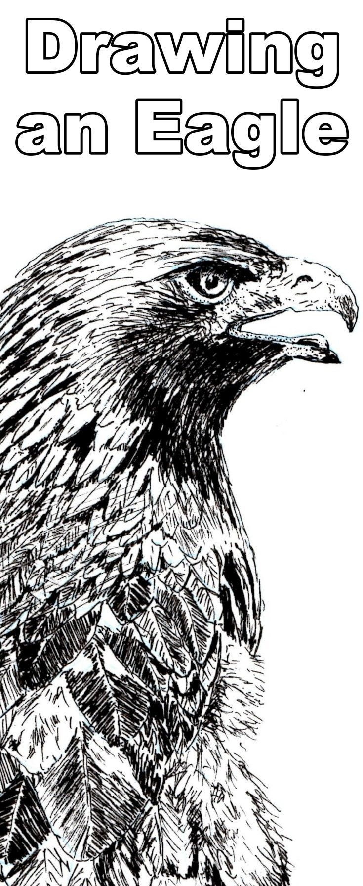 Learn to draw an eagle with this pen and ink drawing lesson | Learn ...