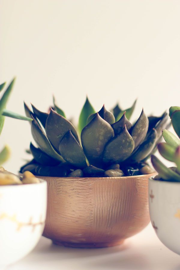 Summer DIY: Succulent Planter