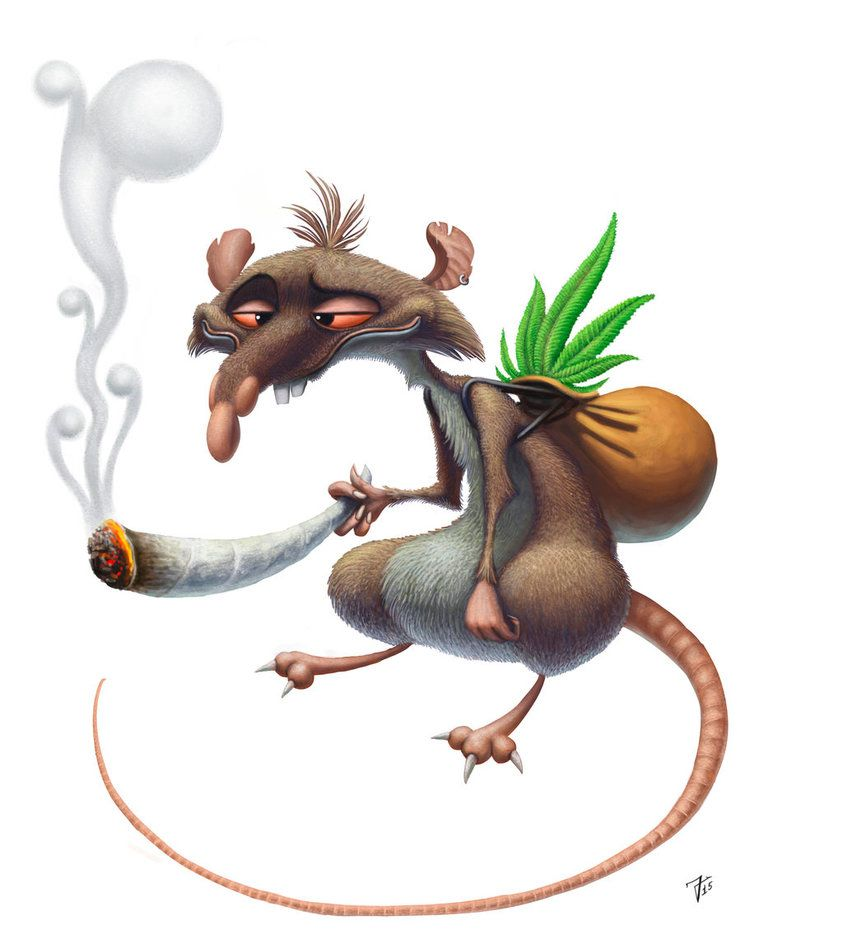 Smoking Rat by nik159 on DeviantArt | Anatomía animal | Pinterest ...