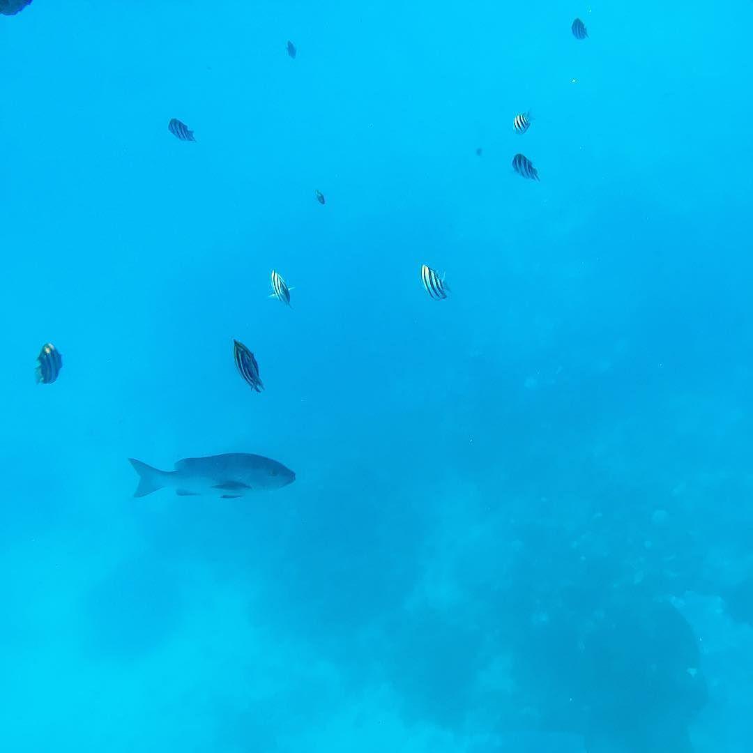 #greatbarrierreef #ocean #water #blue #fish #sealife #underwater by framesandangles http://ift.tt/1UokkV2